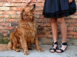 Do pets mean more rental income?
