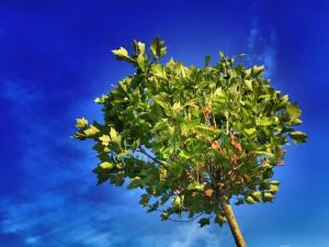 tree-824429_1920