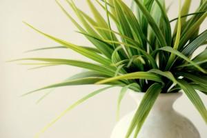 Plant 828714 1920