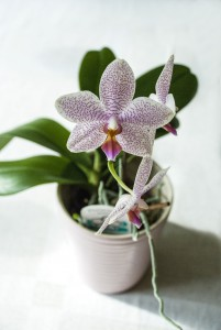 Orchid 1712047 1920
