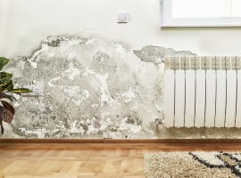 Rising damp: The scourge of old homes