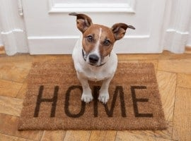 Confusion over pet ban in NSW apartments set to lift with passing of new laws