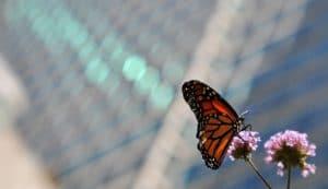 Caterpillar Butterfly In City