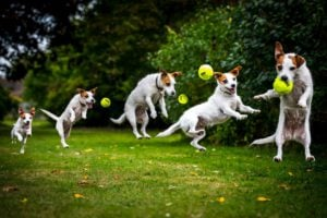 Dogs Jump