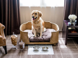 Landmark judgment a huge win for apartment owners with pets